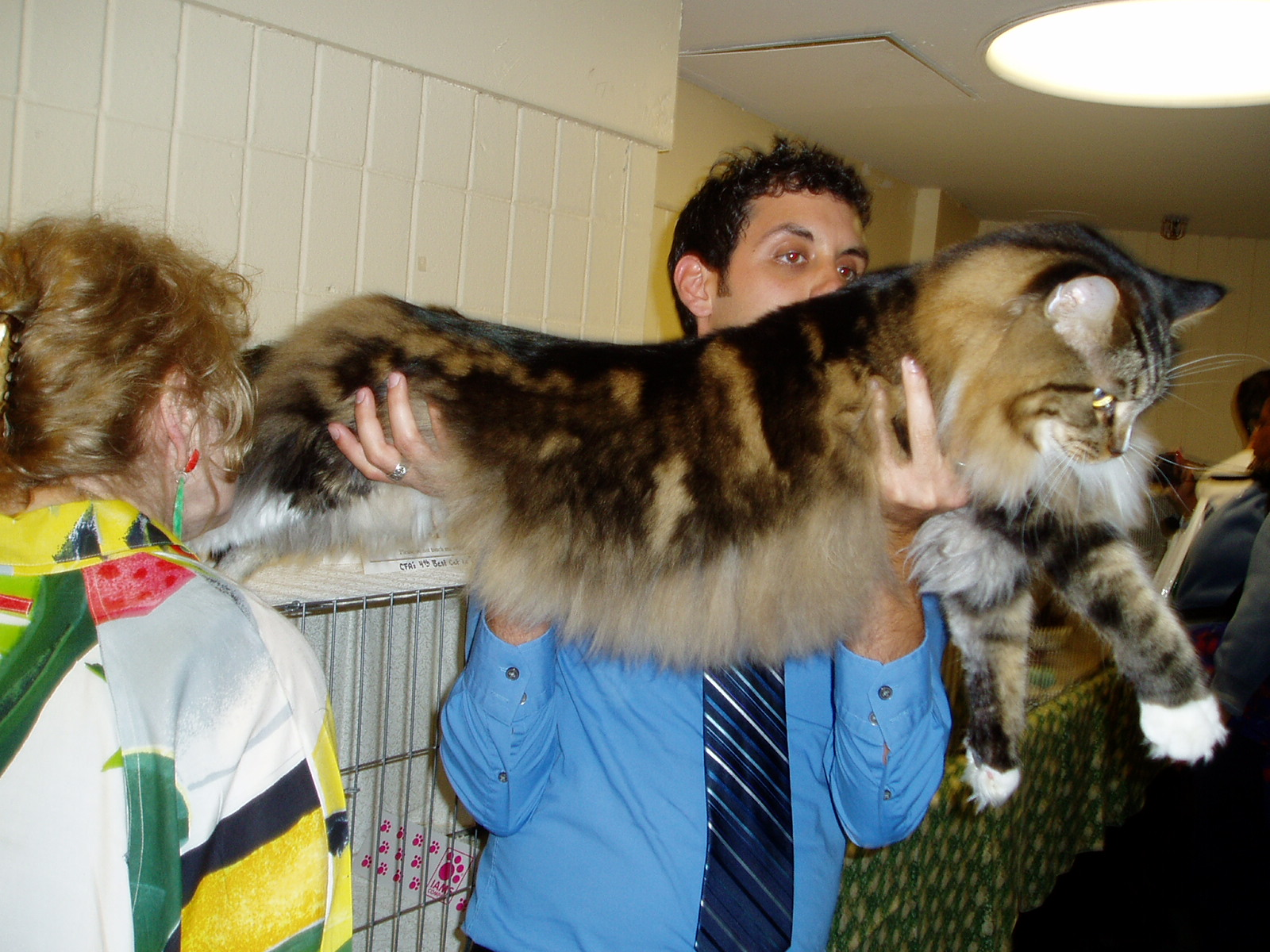 Medzinárodná výstava ušlachtilých mačiek - Kam v meste  24ce5ed421e