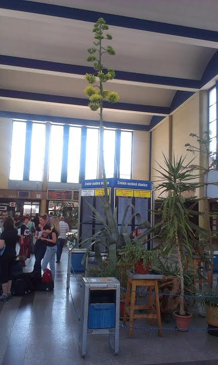 a5e7505cc17c9 Vo Zvolene na železničnej stanici rozkvi - Kam v meste | moja Bystrica